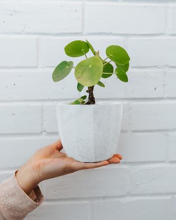 04-13-20 Planting Hands