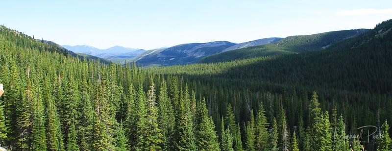 Colorado Mountain forests
