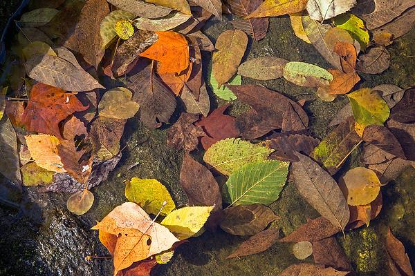 Single Images - Color