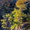fall cypress