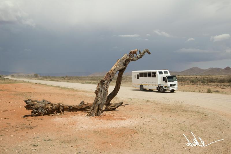 Nomad Truck.jpg
