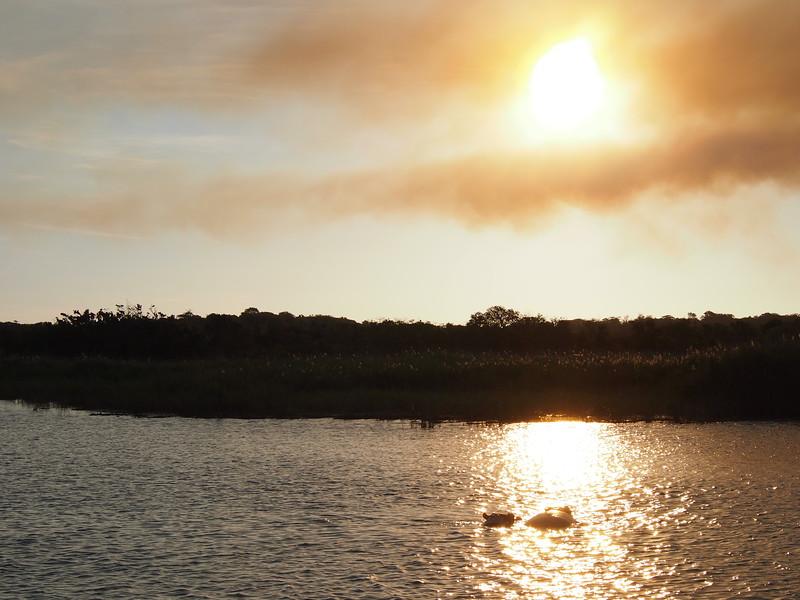 P5036139-hippos-in-the-sun.JPG