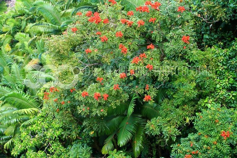 Lush Tropical-Horizontal_batch_batch.jpg
