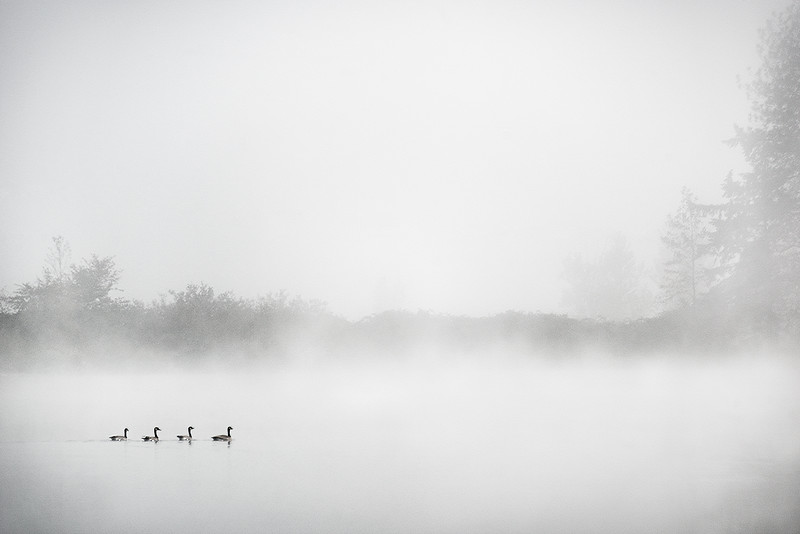Floating Geese, Study 3