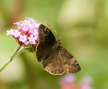 butterflies_13sept09QBG013.jpg