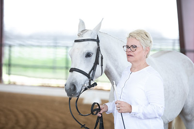 Horse 480