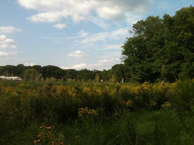 2012-08-20 Meadow
