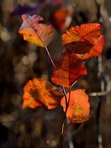 clip-015-leaf-wdsm-01dec09-6460.jpg