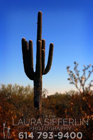 Arizona 3-18