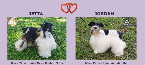 Jetta & Jordan Puppies, DOB 3/16/2021