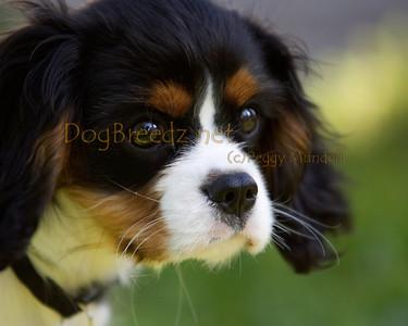 Action Dog Sports Club - February 2012 (Sunday Show 1)