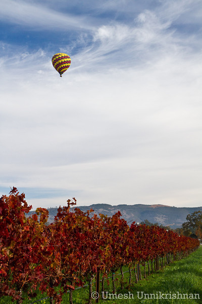 Napa Hot Air Balloon 040.jpg
