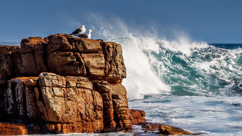 Wildlife at stunning Cape of Good Hope.