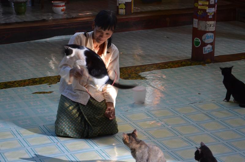 DSC_4443-jumping-cat-at-nga-hpe-kyaung-monastery.JPG
