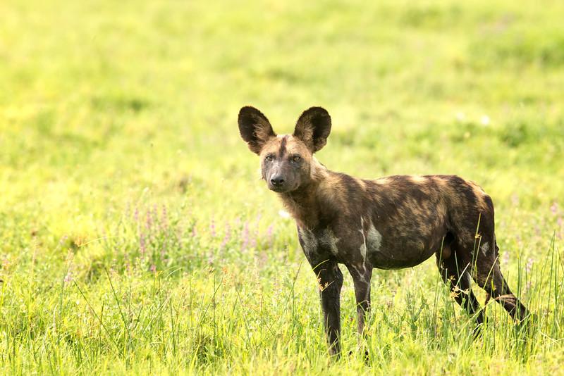 Serengeti 2015