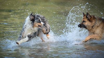 Dogs | Hunde