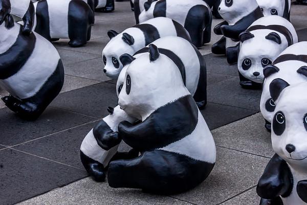 1600 Pandas+