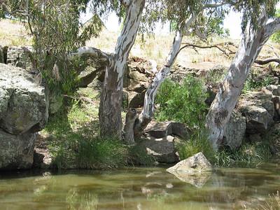 Werribee - Lollipop Creek