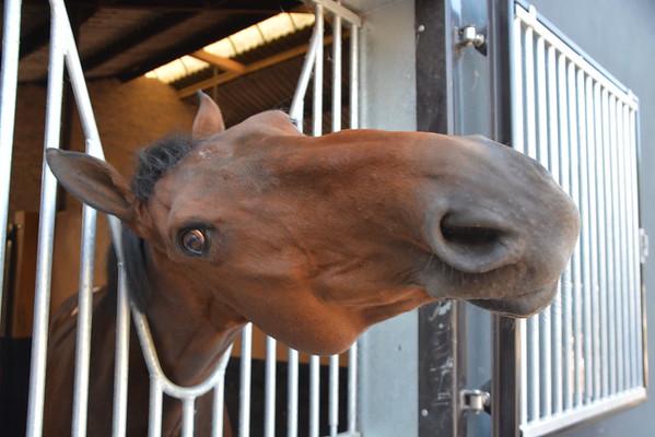 Dagje bij Jose en de paarden
