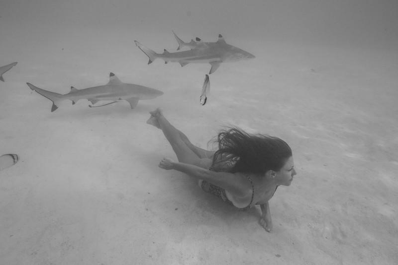 sharks-86-9 copy.jpeg