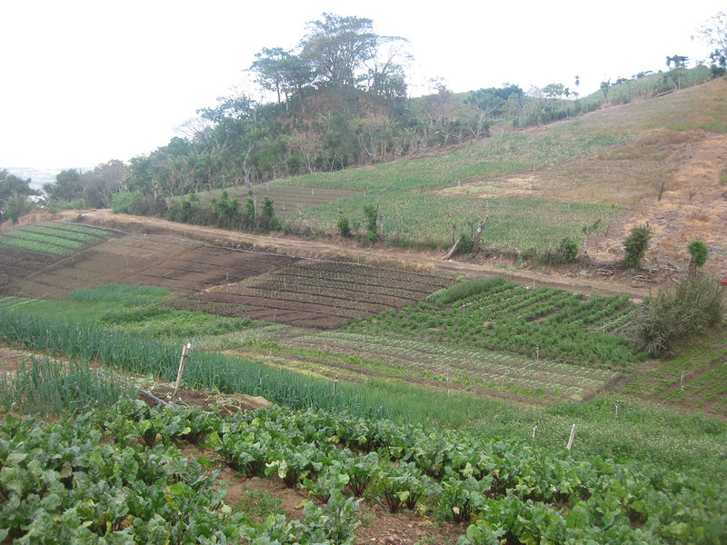 Internal road & vegetables in terraces.