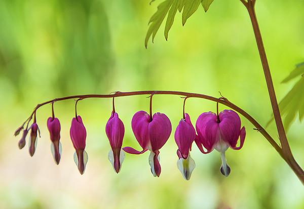 Macro/flowers