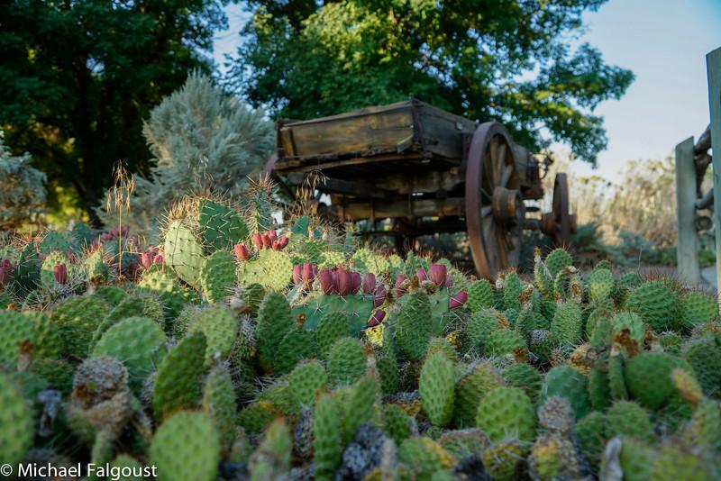 Oregon_Trail-67.jpg