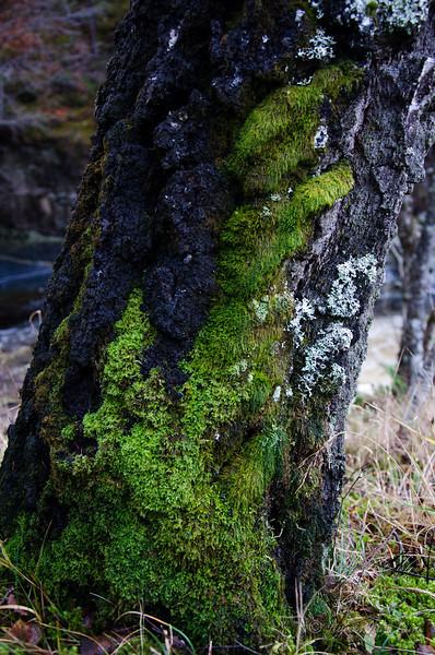 Scotland-Highland-9295.jpg