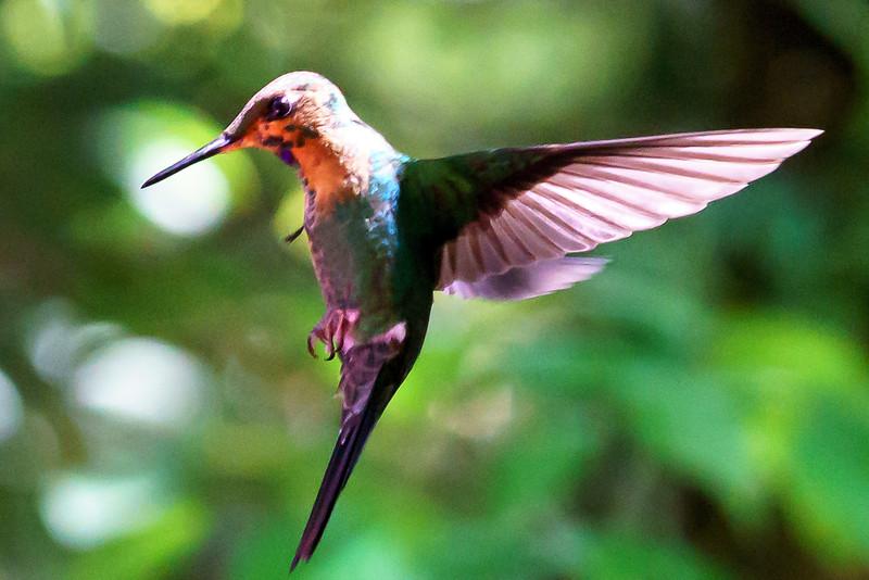 Costa Rica 2015-3639.jpg