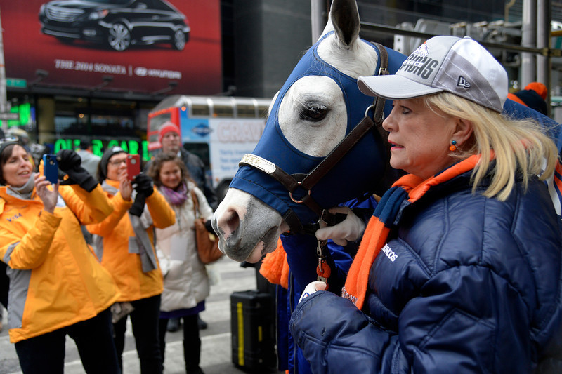 . Sharon Magness Blake with her horse, Broncos mascot Thunder, an Arabian gelding mascot, is photographed on his way to Times Square on January 31, 2014, New York, NY. (Photo By Joe Amon/The Denver Post)