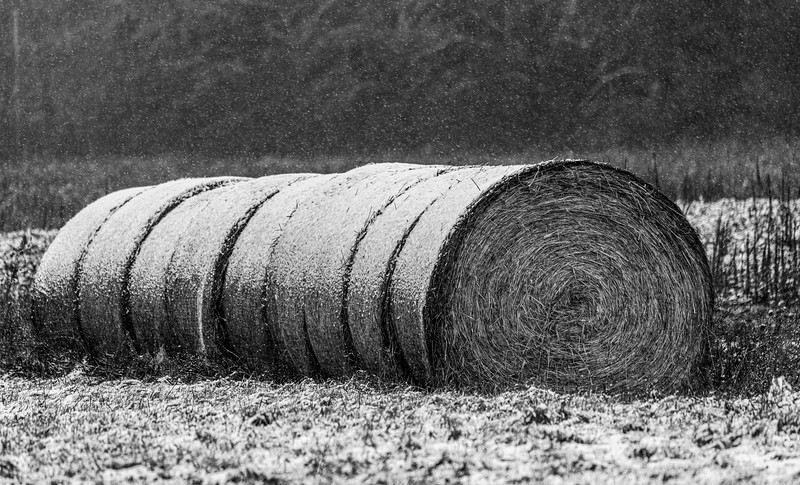 Frosted Hay Bales