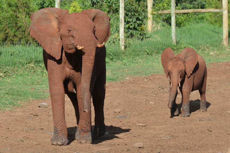 East Africa Safari 71.jpg