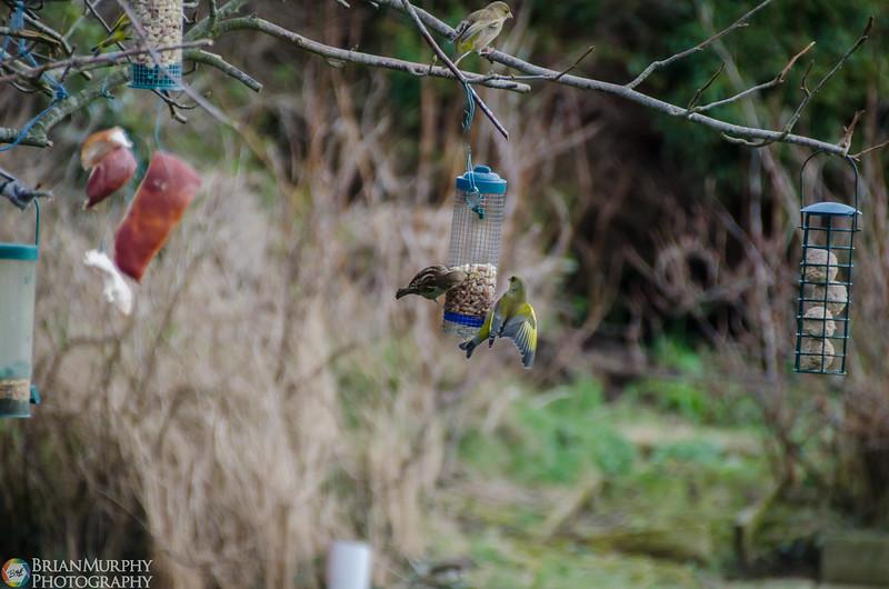 Birds 050218-4.jpg
