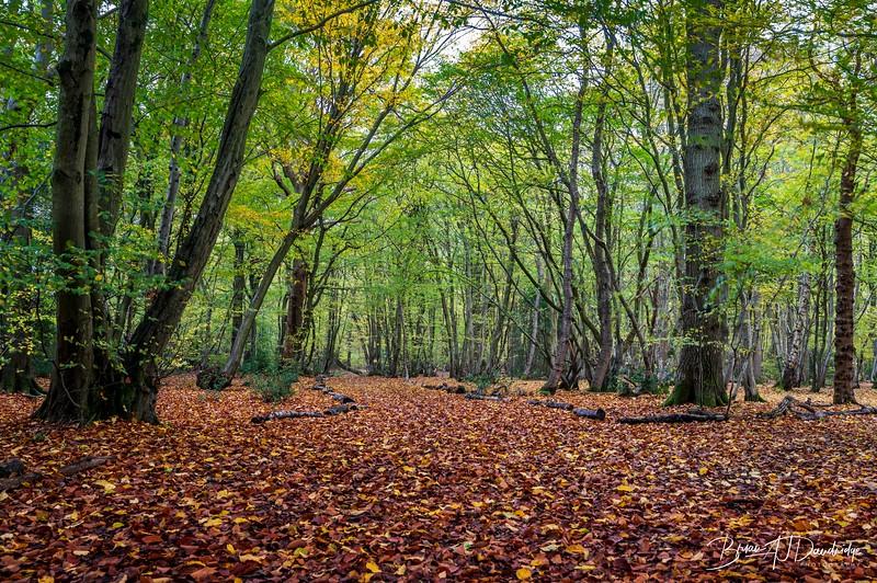 Bedelands_Woodland-5137.jpg