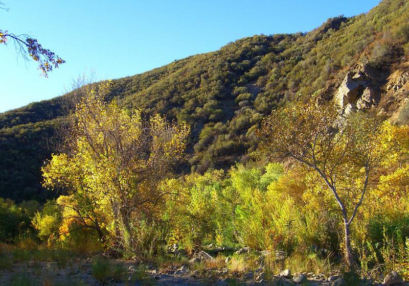 California fall colors