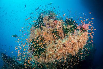 Fiji Underwater November 2016