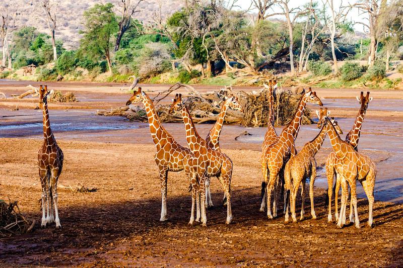 Kenya 2015-00190.jpg