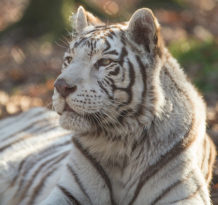 Exotic Feline Rescue Nov 2012