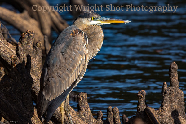 Landscapes & Wildlife of Texas