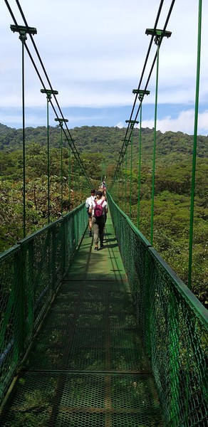 Treetop Bridges