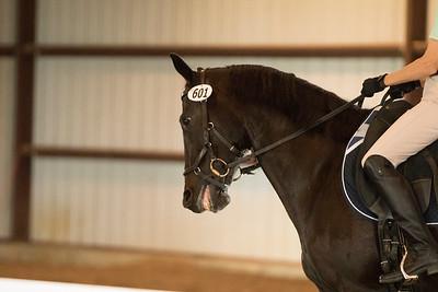 Horse 601