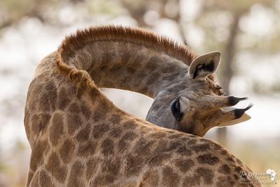 The Mammals of Botswana 2016