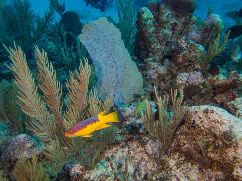 Tulum Trip - Diving 20130405-17-47 _405263204.jpg