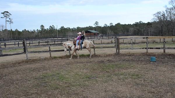 Savanna horse Jan 22