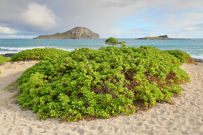 Makapu'u beach. © 2020 Kenneth R. Sheide
