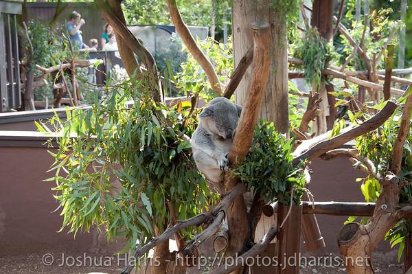 San Diego Zoo 2009