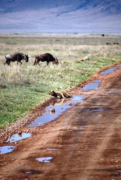 Ngorongoro (39).JPG