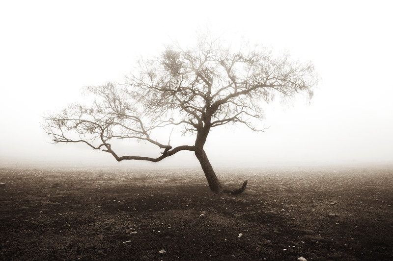 2009-12-13 Ozona Single tree in fog 1056.jpg