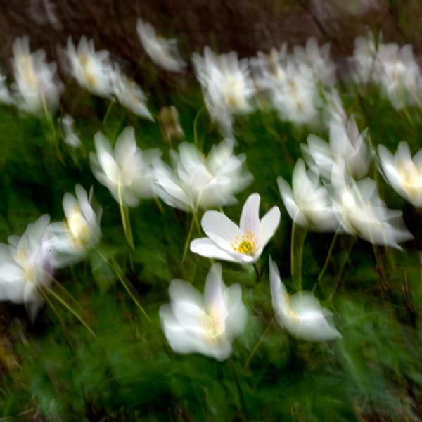 Dag_030_2012-maj-11_6082x.jpg