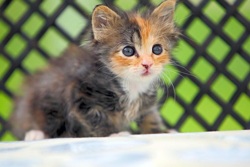kittens_005-1.jpg